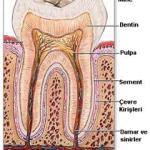 Diş Çürükleri ve Ağız Sağlığı